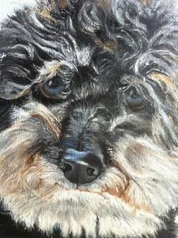 Poodle Pet Portraits in Detail