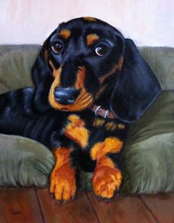 Dog Pet portrait in oil paint