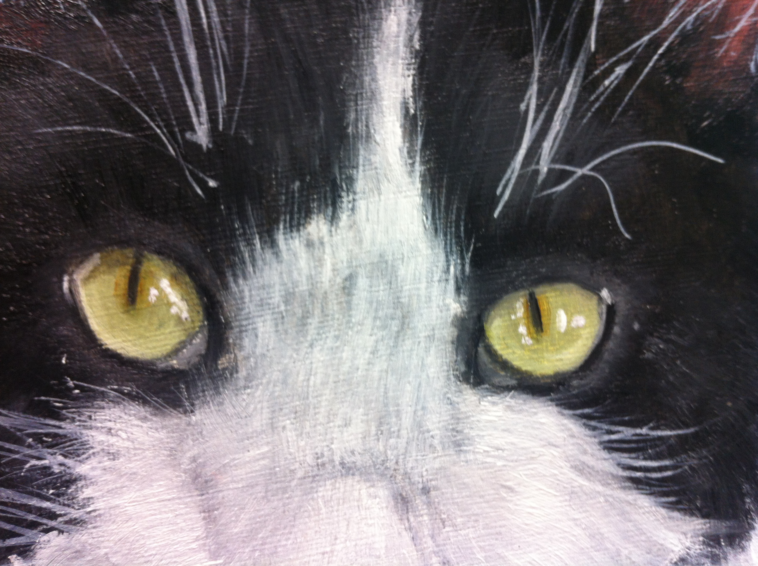 Cat Pet Portraits Detail