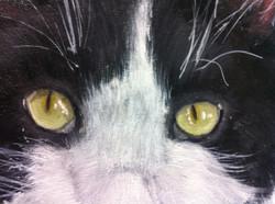 Cat Pet Portraits Detail