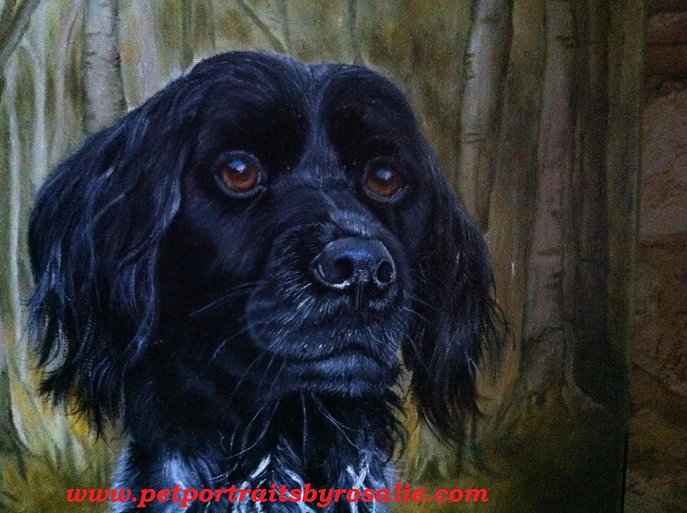 Dog Pet Portrait Munsterlander