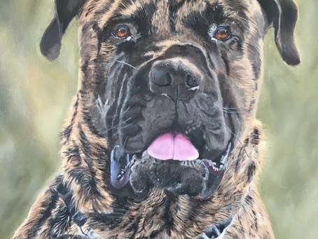 a lovely testimonial of a pet portrait
