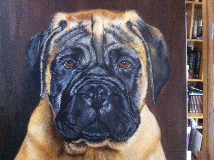 Bull Mastiff Pet Portraits in Detail