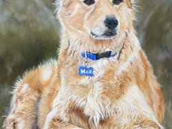 Max - Oil Painting