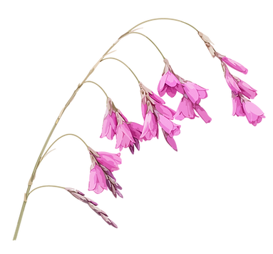 Logo-Flowers.png