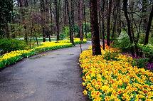 garvan-woodland-gardens.jpg