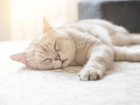 青山不墨 x ELLE 專欄:出走了的貓,還會歸來嗎?