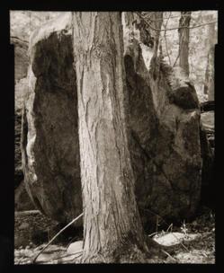 Boulder and Oak