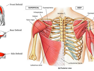 Stretch Series - Shoulders