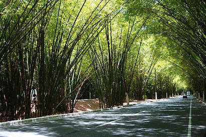 bambuzal.jpg