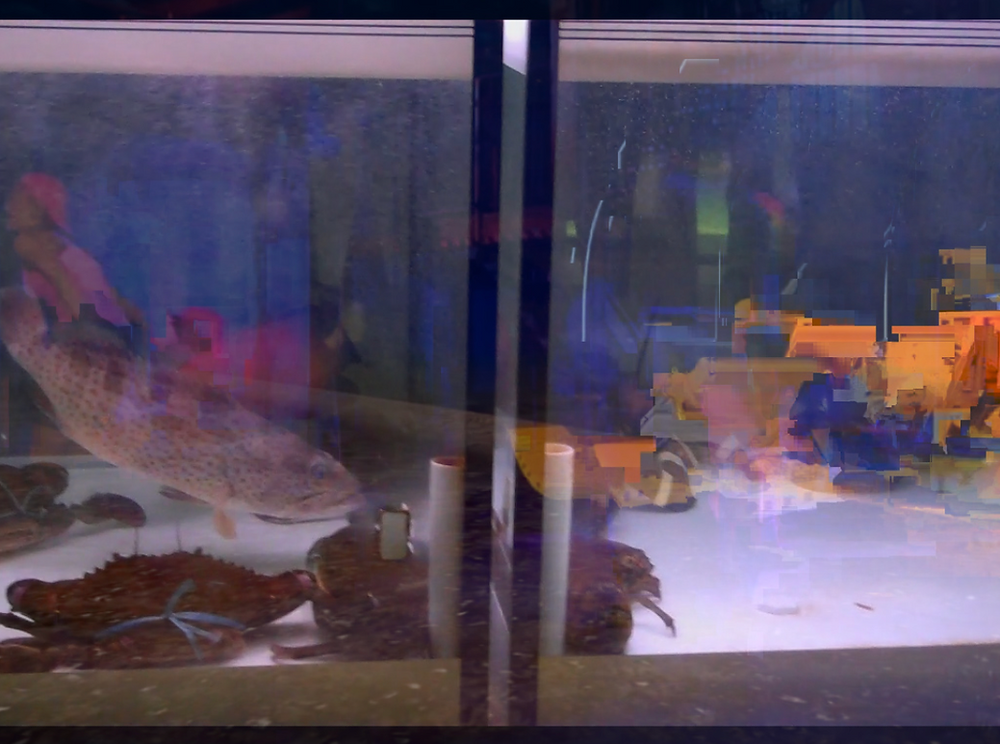 A film still taken through the glass walls of a fish tank shows a large, brown-speckled fish minding its own business in blue underwater light cut through with orange, green, and pink glitches.