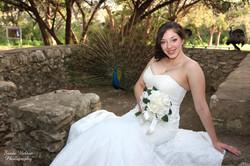 Bride & Peacock