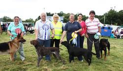 Puppy Parlour Dog Championship Final