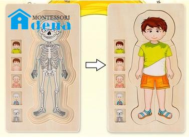 Body of Man