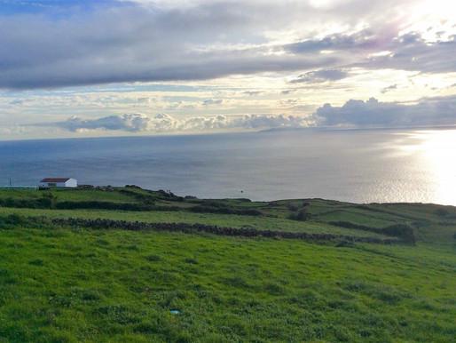 O drama da Cadeia de Valor de Leite da Ilha Terceira