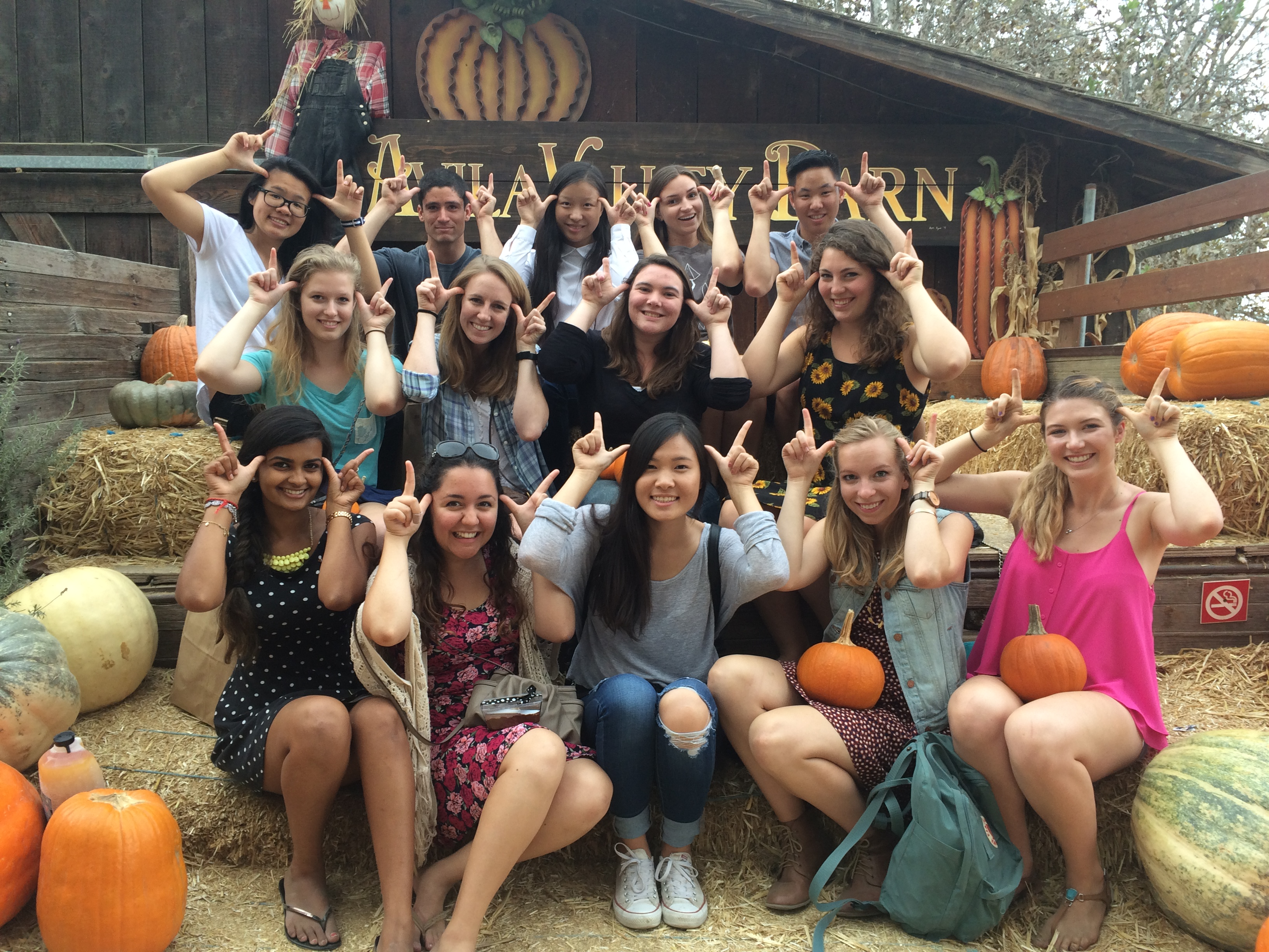 2015 Pumpkin Patch