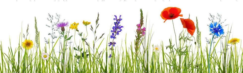 wildflower-meadow.png