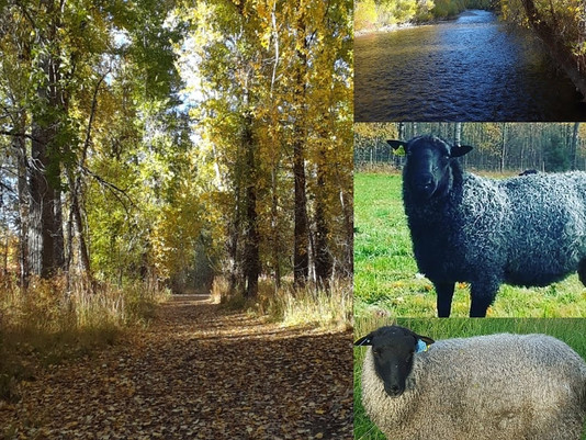 Trailing of the Sheep Festival Oct 12-13