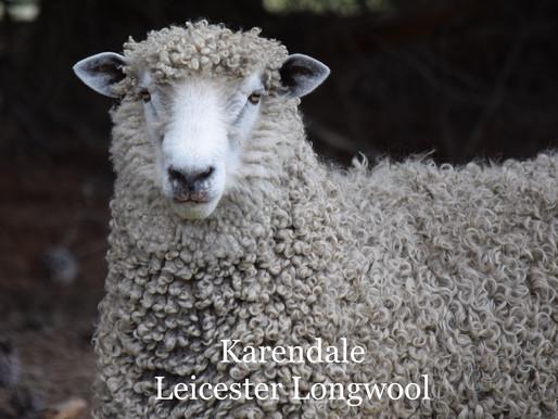Leicester Longwool AI rams 2021