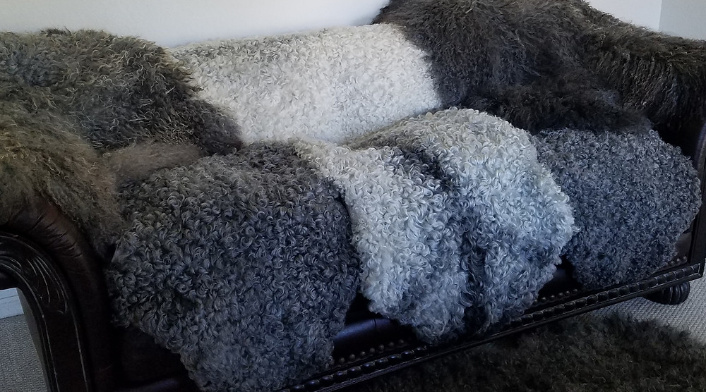 Washable Gotland Sheepskins (curly) and supersoft longhair sheepskins
