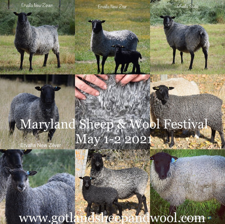 Maryland Sheep and Wool Festival 2021