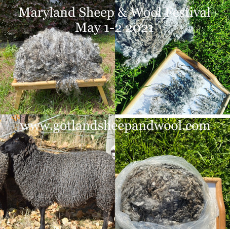 Maryland Sheep & Wool Festival - Gotland lambwool