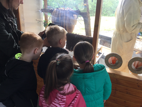 Year 1 Visit to Quince Honey Farm