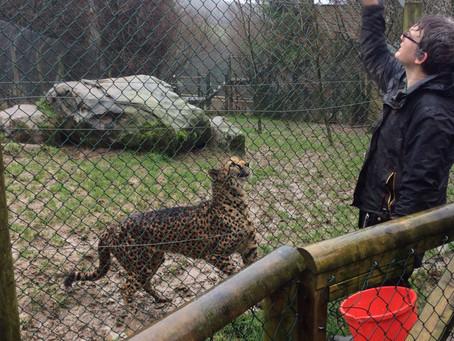 Year 1 Exmoor Zoo