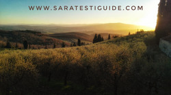 saratestiguide