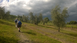 In the middle of olive groves