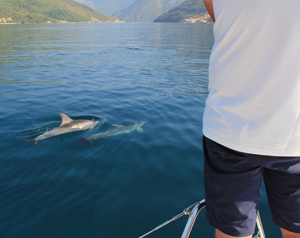 Delfine spotten auf einem Segeltörn