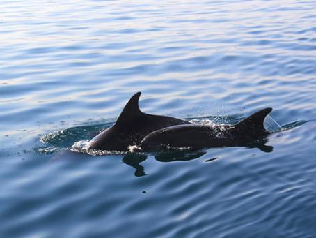 How To: Delfine finden im Mittelmeer