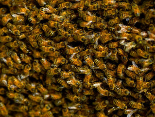 Being busy is a bad business (to bee in)