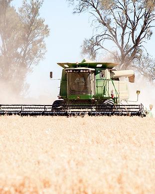 harvest_86.jpg