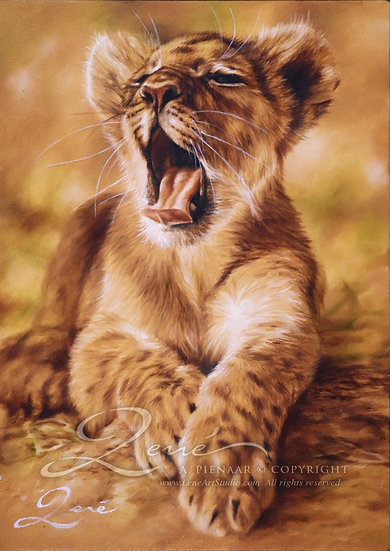 Lion Cubb