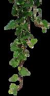 vines.png