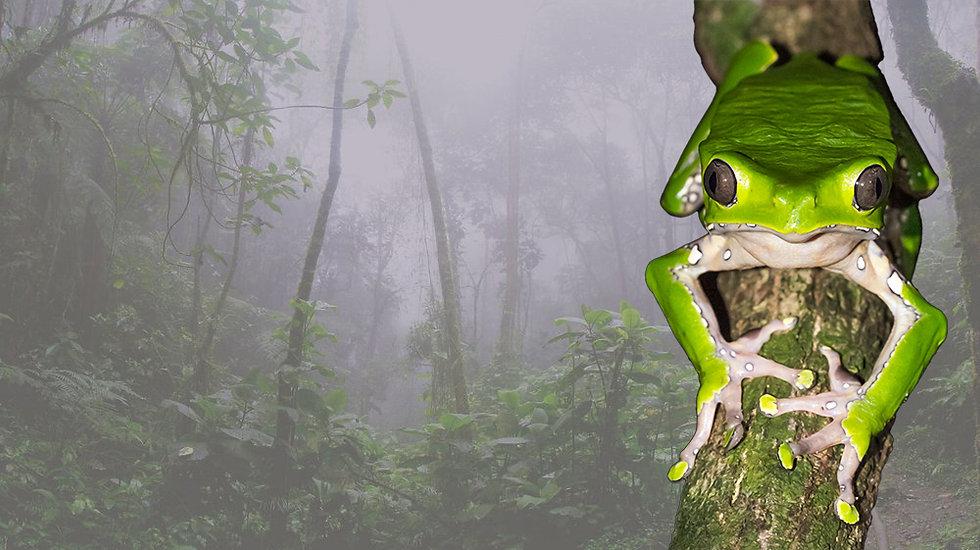 jungle-rainforest-home-of-kambo-frog-ban