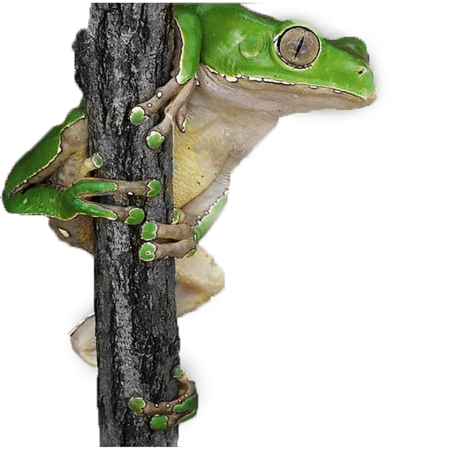 froggyyy.png