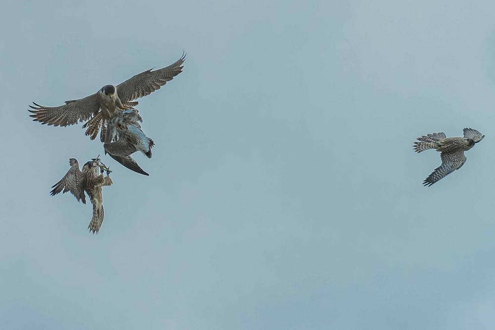 Boulder Flatirons seasonal closures for birds prey