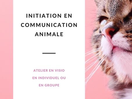 Initiation en Communication animale