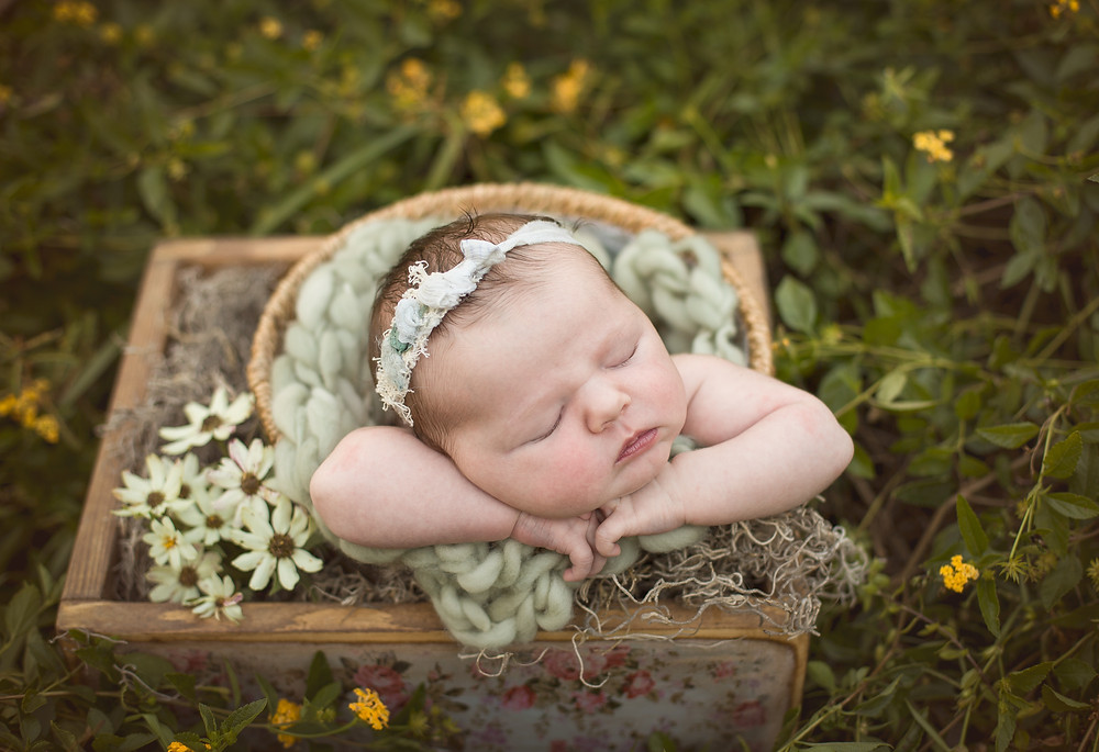 Baby in Field of Flowers, Venice, Florida
