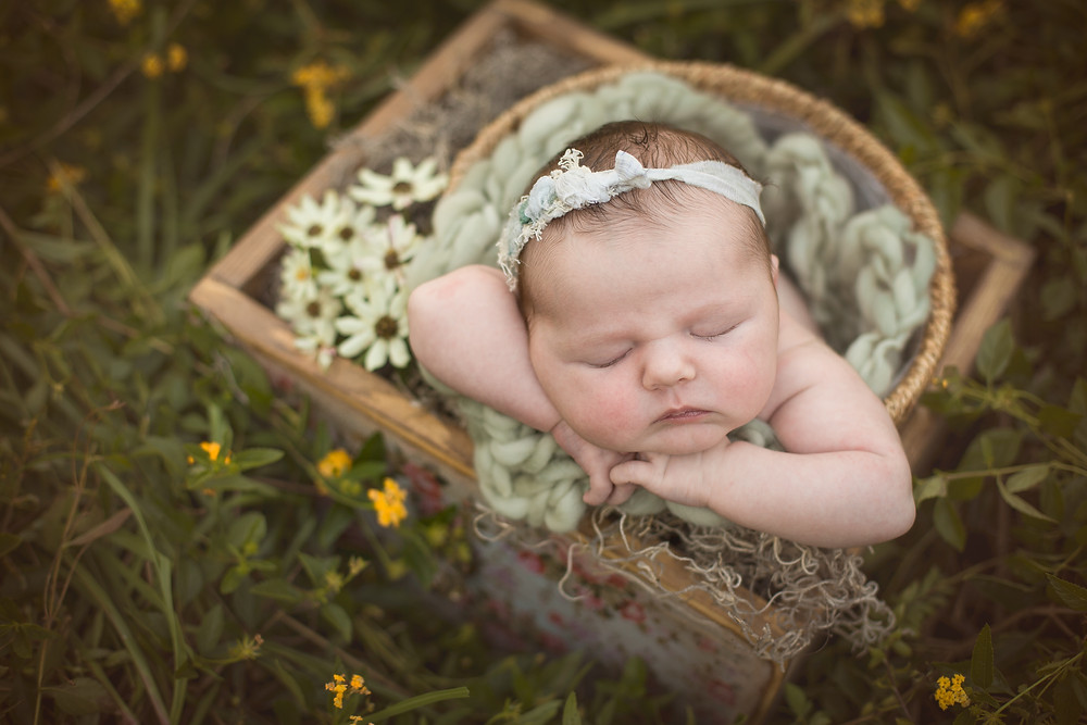 Baby Girl in Field of Flowers, Venice, Florida
