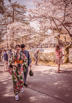 """""""Sakura"""" (2016)"""