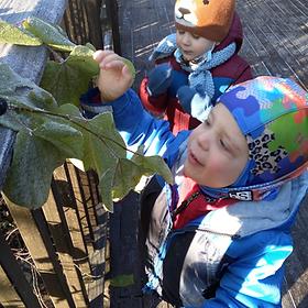 Ijams Nature Preschool children looking at leaves