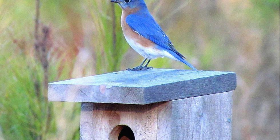 Beginning to Bird: Bird Boxes (Adult Program)