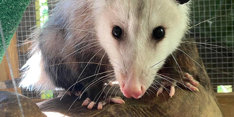 Farragut Program: Amazing Animals of Ijams (Family Program) (1)