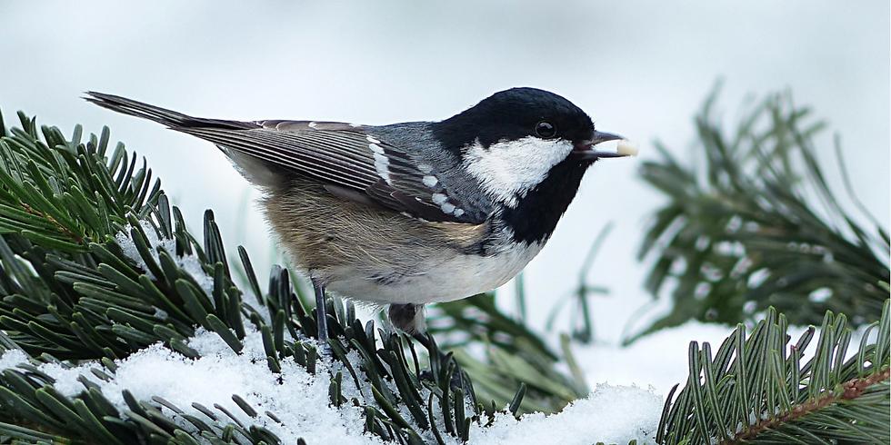 Beginning to Bird: Finding Food (Adult Program)
