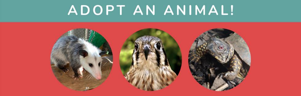 Animal%20Adoption%20Slider_edited.png