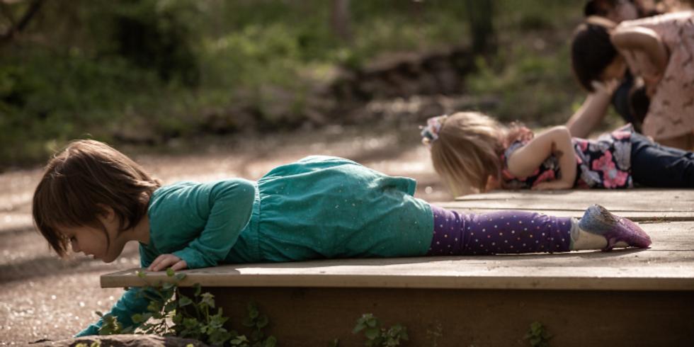 Nature Senses (Family Programs)