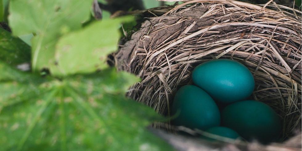 Beginning to Bird: Eggs and Nestlings (Adult Program)